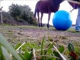 Essayer de jouer au foot avec mon cheval