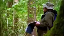 Animal Planet 2015 - Discovery Channel - Wildlife Animals - Butterfly Documentary [HD 720]