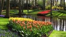 Pays-Bas parc botanique de Keukenhof en Hollande ( Holland park keukenhof )