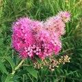#flowers #flower #TagsForLikes #petal #petals #nature #beautiful #love #pretty #plants #blossom #s