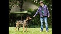 Max 2015 Full Movie subtitled in Spanish