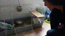 garde animaux particulier Paris échange d'Eugénie pour son lapin Praline