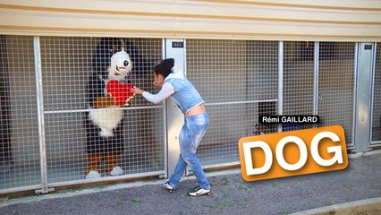 Dog (Rémi Gaillard)