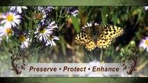 Saving Wildlife By Saving Land