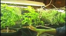 I Grow Chronic! 9of9 (Marijuana hydroponic grow room setup