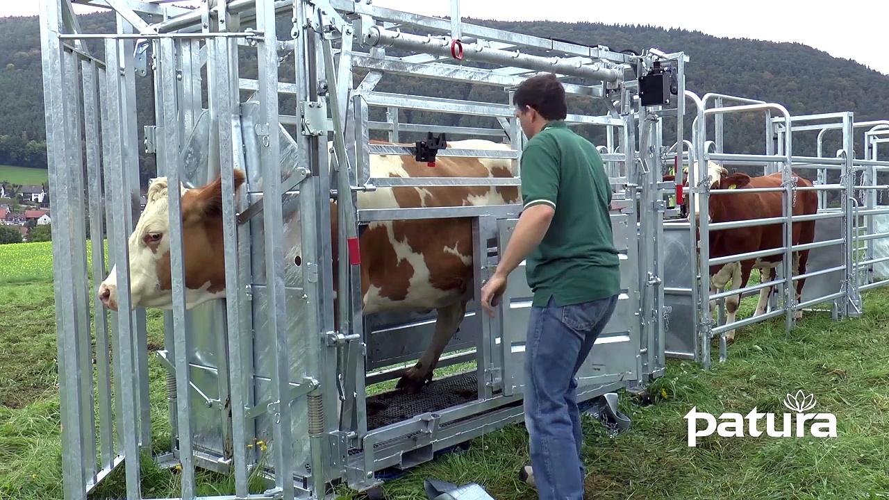 PATURA Cattle Crush A8000
