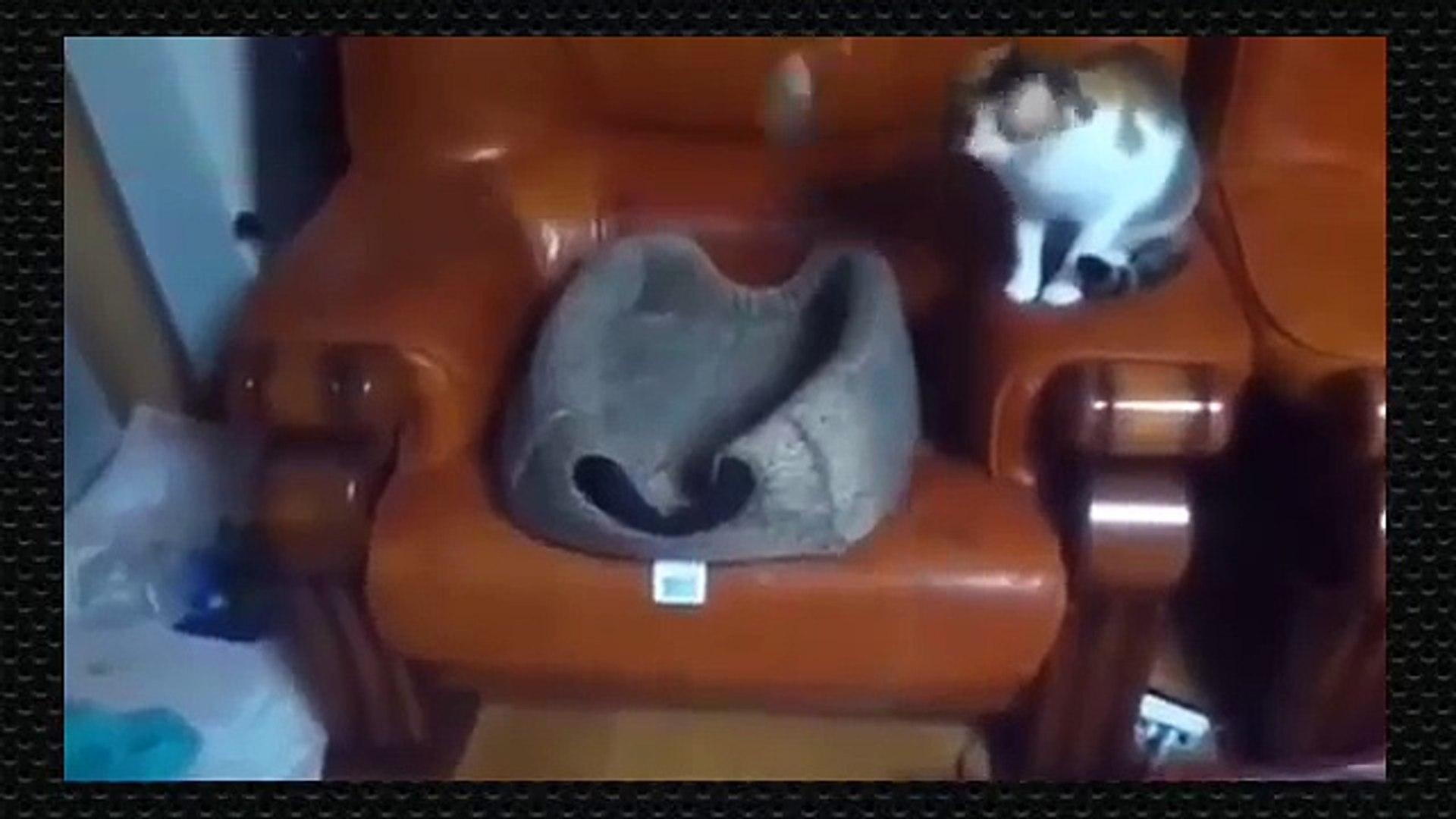 Live Pets funny pics. Pets funny pet videos