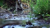 Primavera a orillas del rio