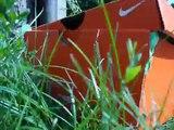 jerzyk (apus apus) - wypuszczenie