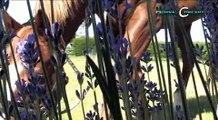 HORSE COACHING : coaching horse formations management avec chevaux