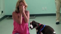 Disabled Dog Walks Again After Rehab