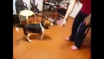 Epic Animal Fails NINE, Cats and Dogs   Funny Videos, Best Pranks   January 2015