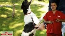 Malos hábitos alimentarios en mascotas  - Nutrición Royal Canin