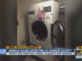 Arizona Humane Society looking for help after fire in Phoenix facility