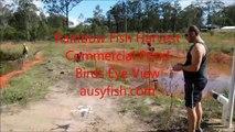Rainbow Fish Harvest Commercial Pond Birds Eye View