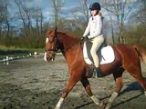 Canter/trot transitions. What are you doing with your riding position? Horse Training Dressage tips