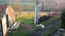 COUPES ET PRIX - Michel Hurteau éleveur de chèvres