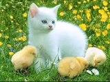 Eğlenceli çocuk şarkısı  Pazara Gidelim Bir Tavuk Alalım