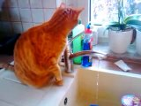 Cat Freddy drinks water from the tap