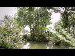 Konservasi Sempadan Situ youtube
