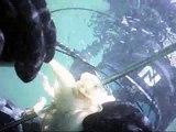 Caça Submarina - Chocos & Raias ( sepia, seppia, cefalo)