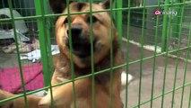 Controversy over puppy rentals
