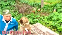 Funny Videos   Funny Vines Cats   Cute Funny Cats Videos   Funny Cat Videos   Cool Cute Cats