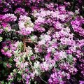 Old pictures #flowers #flower #TagsForLikes #petal #petals #nature #beautiful #love #pretty #plant