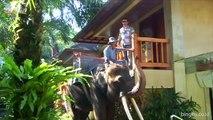 Elepant Safari Park & Lodge Taro Bali   Elephant Safari Ride Tour
