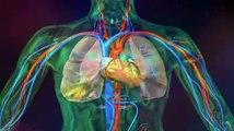 Fonctionnement du coeur   Symptômes   Définition   Diagnostic   Traitements flv240p H 263 MP3