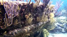 Montana and Constellation shipwrecks. Diving Bermuda shipwrecks.