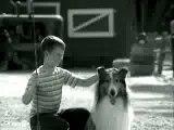 Kung fu Lassie