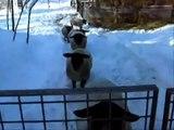 pecore razza Suffolk e Romanov all'allevamento Il Poggio, 20-12-2009. Gregge a Livello 1 ARR/ARR