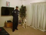 6 Mths Old White German Shepherd Puppy Demonstrates Off-Leash Obedient Training by FACW K9 Training