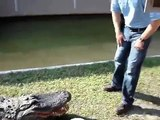 Crocodile Tease (Schnappi Tease)