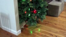 Crazy Cat Attacks Christmas Tree - again and again