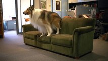 Lassie Visits The New Yorker –Behind the Scenes –The New Yorker