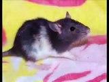 """The Rat Guru"" Channel Trailer (The NEW Rat City)"