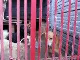 Krzyczki-schronisko dla bezdomnych psów
