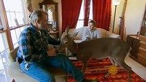 Video The common bond of animal odd couples