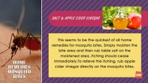 Home Remedies For Mosquitoes Bites | Best Health Tips