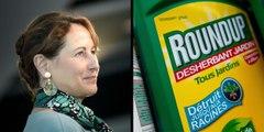 """Interdiction du Roundup : """"un coup de com'"""" pour Ségolène Royal ?"""
