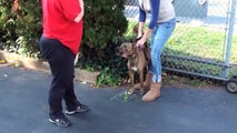 Aggressive Death Row Rescue - NYC Dog Behavioral Training - DCTK9