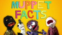 The 11 Most Important Muppet Facts