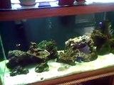 SALT WATER FISH TANK COOL FISH