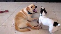 Little Dog Beats & Humps Big Dog