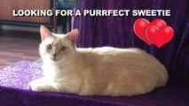 Online Dating voor Cats