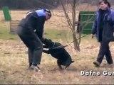 Protection training in Dobrejovice 21. 3. 2010 - bitehelper Ludek Silhavy