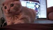 Один день из жизни котенка
