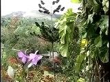 Travel To Havana Cuba Documentary - The Bible's Modern Day Garden Of Eden